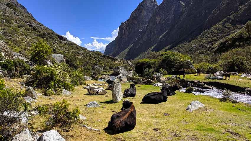 vaqueria paria trekking santa cruz